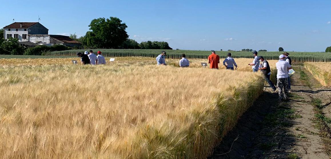https://www.negricereali.it/wp-content/uploads/2020/09/negri-logo-commercio-di-cereali-prodotti-per-lagricoltura-home3.png